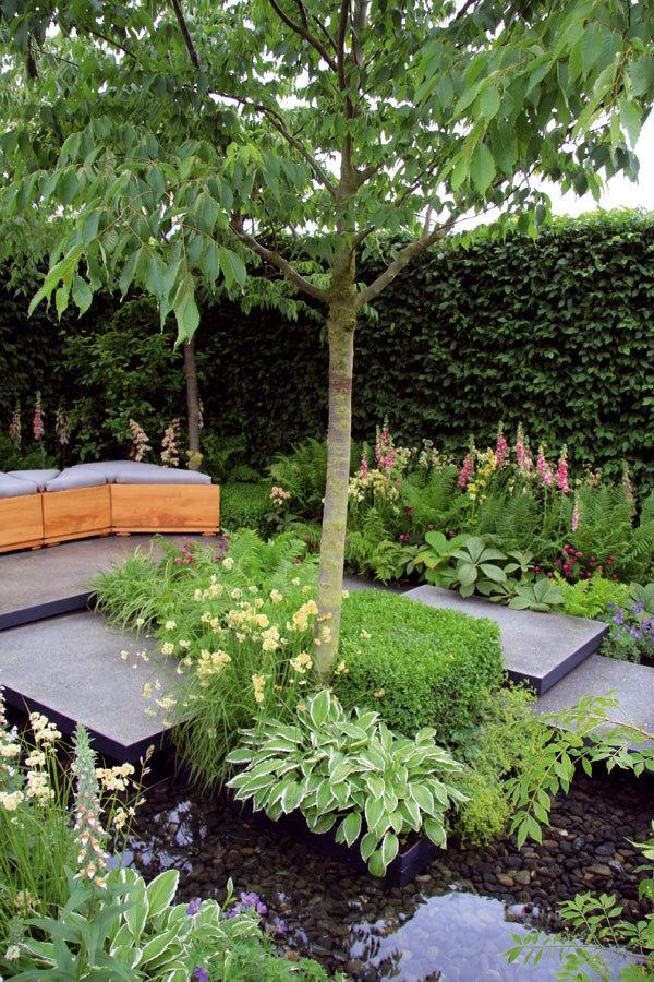 Nevelká městská zahrada ve stínu stromů poskytuje ideální podmínky mnoha zajímavým rostlinným druhům.
