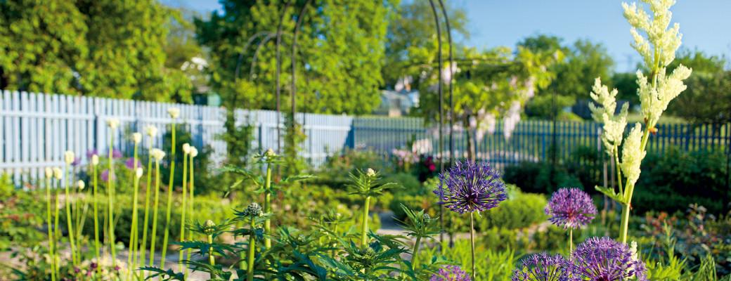 Krásná přírodní zahrada na okraji malé jihočeské vesnice