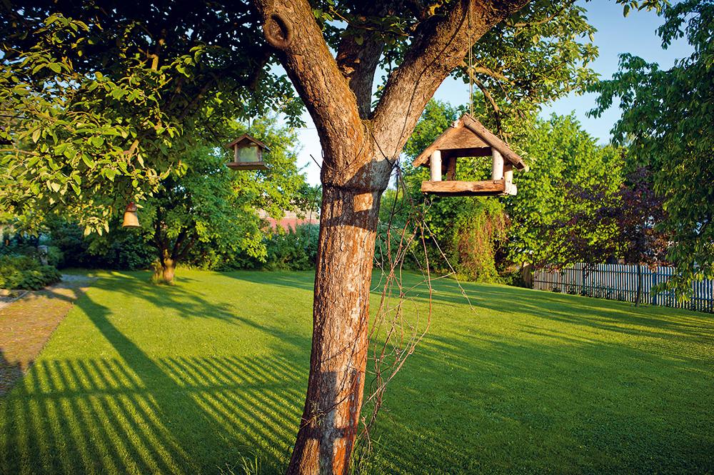 Ve druhé, větší části přední zahrady zůstalo několik starých ovocných stromů jako vzpomínka na minulost. Nízký trávník podtrhuje jednoduchost úpravy. Foto: Jiří Tvaroh
