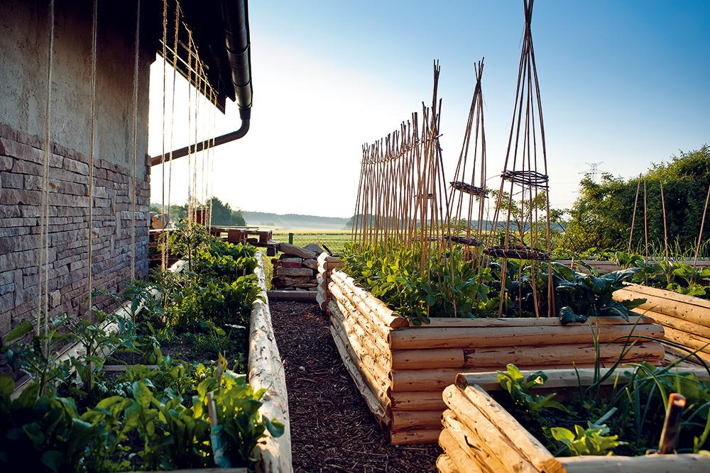 Svěží zelenina se skvěle vyjímá na vysokých záhonech v ranním oparu Třeboňské pánve.  Foto: Jiří Tvaroh