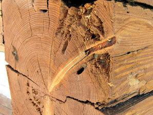 Houby jsou oblíbenější určitě v lese než na dřevostavbách či doplňcích v exteriéru nebo interiéru. V praxi se proti nim používají fungicidy. Hmyz by měly naopak odpudit insekticidy. Pro výběr vhodného chemického prostředku proti dřevokaznému hmyzu je dobré znát třídu ohrožení dané dřeviny s ohledem na konkrétní škůdce.