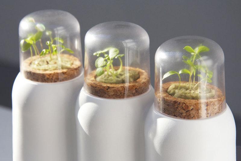 pestovani bylinek, kuchyne