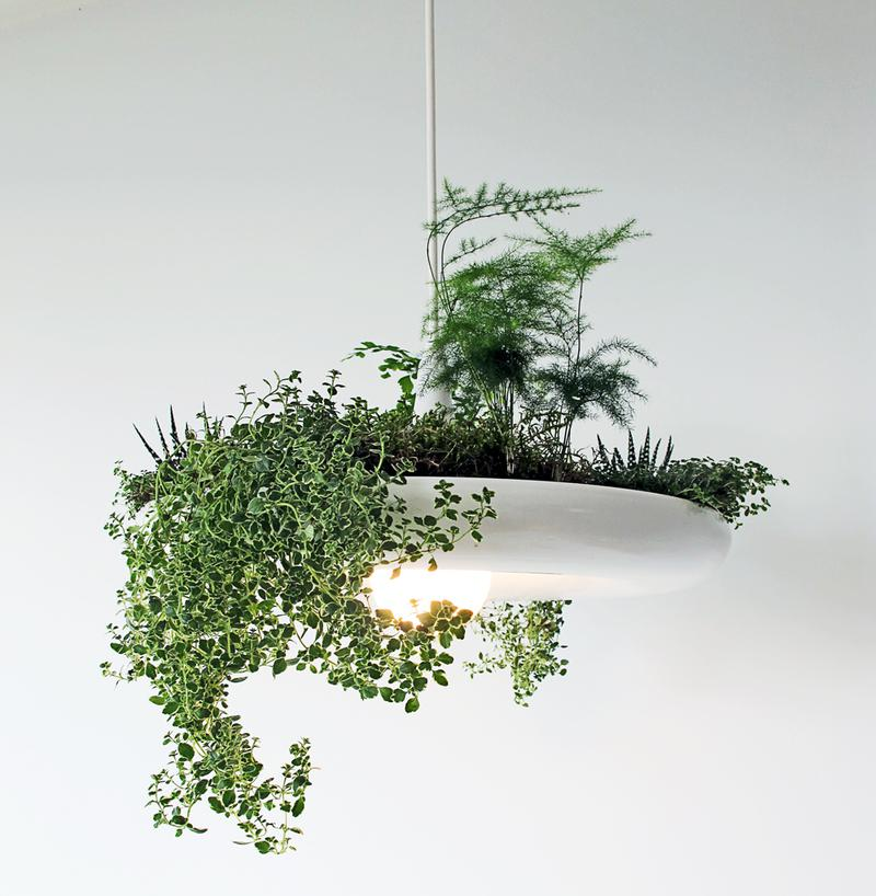 Zkuste pěstovat bylinky na lustru