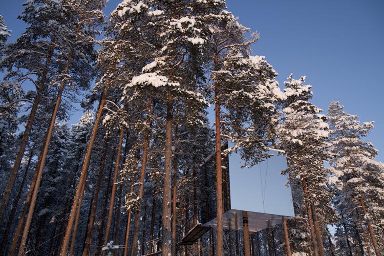 dům v korunách hustého borovicového lesa