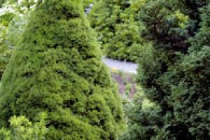 Jehličnany (nejen) do malých zahrad