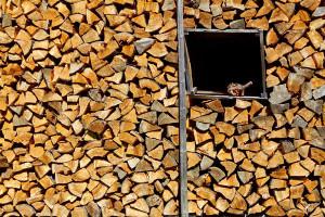 Vytápění biomasou