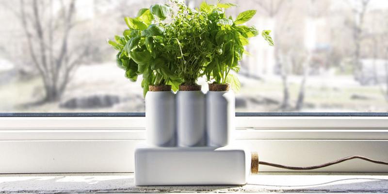 Bylinková zahrada přímo v kuchyni