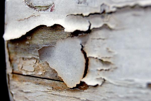 Tipy jak prodloužit životnost dřeva