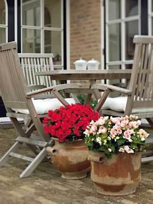 Půvab balkonových květin