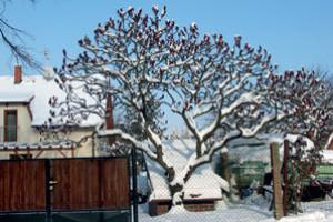 Zimní krása stromů a větví