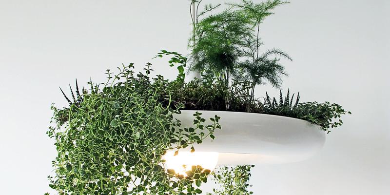 Novým trendem jsou živé rostliny přímo v lustru