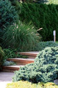 Zahrada s lekníny a barevnými karasy