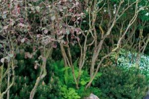 Divoký půvab severské zahrady