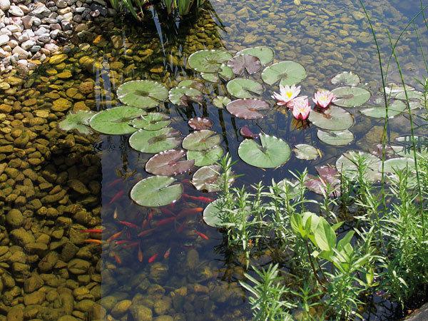 Malé vodní prvky v zahradní kompozici