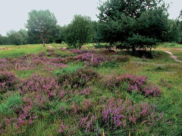 Pohled do vřesovištní zahrady