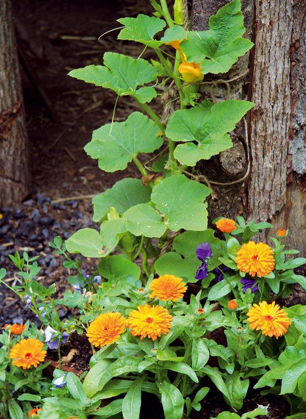 Z obyčejné zeleniny neobyčejná zahrada