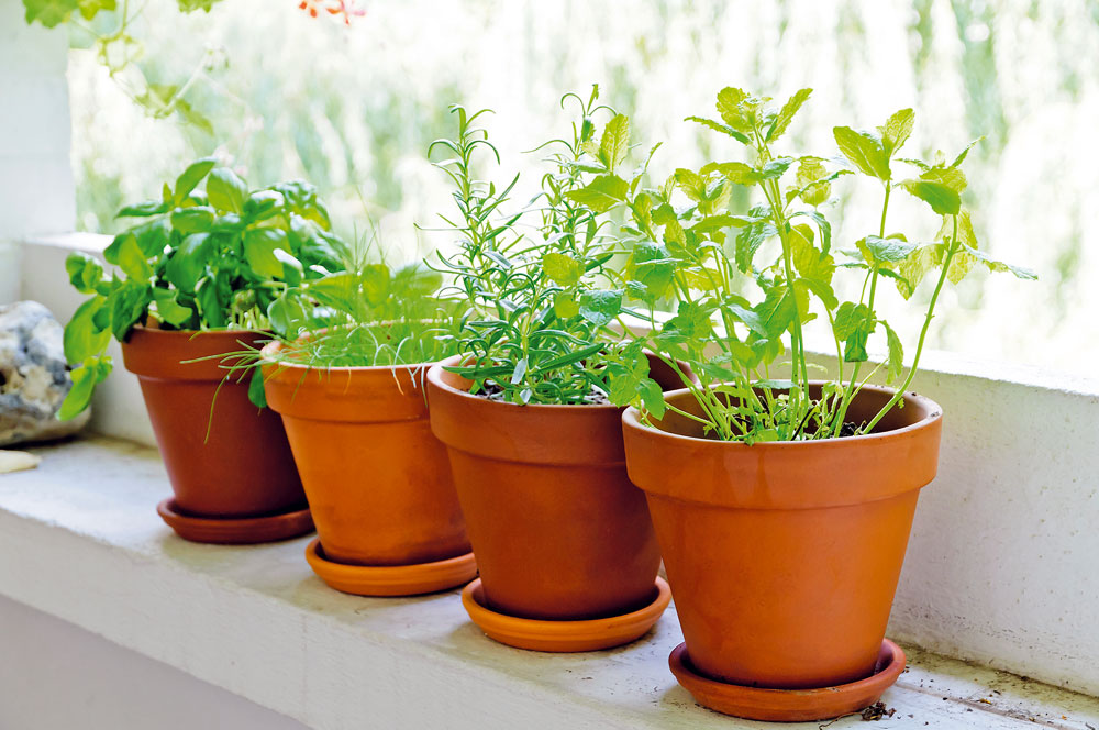Vypěstuje si doma vlastní bylinky