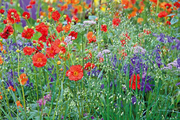 Při plánování květinových záhonů nezapomeňte na barevné amedonosné rostliny. Jsou užitečné avzhledově velmi přitažlivé. Vybrat si můžete zobrovského množství druhů. (foto: Daniel Košťál)