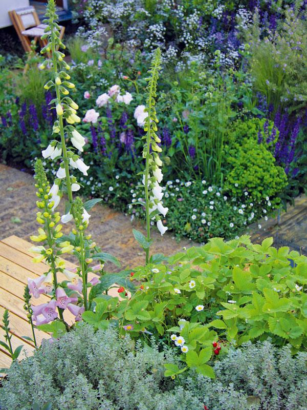 Vnevelké zahradě dominují vedle starého karavanu z vrakoviště především bíle kvetoucí trvalky, které výborně prosvětlí i tmavší místa. Soukvětí náprstníku se ladně vznáší nad okolní výsadbou. FOTO: DANIEL KOŠŤÁL