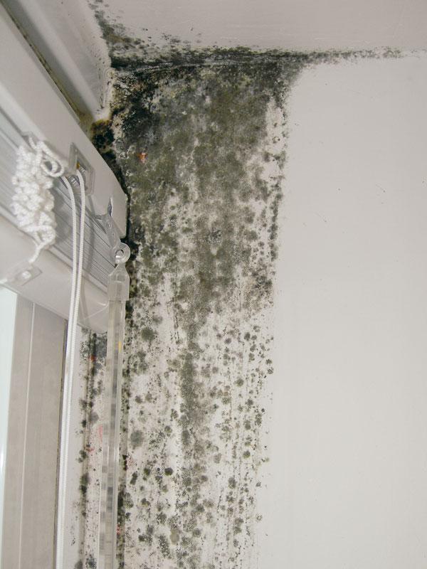 Kritickými místy v interiéru jsou zejména rohy u podlahy a pak ostění – nejčastěji v místech kondenzace vodních par nebo tepelných mostů. foto: Mapei