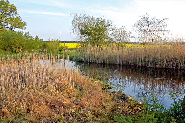 Kořenová čistička odpadních vod udomu může vypadat jako přírodní jezírko. Voda tak zůstane vlokalitě asplňuje ještě mnoho dalších funkcí – zlepšuje klima, probouzí živočišný svět, zvyšuje biodiverzitu, slouží zvířatům ihmyzu. (foto: Artur)