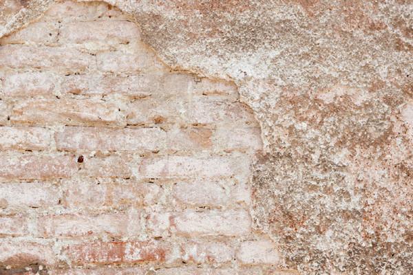 Jak zatočit z plísní na stěnách