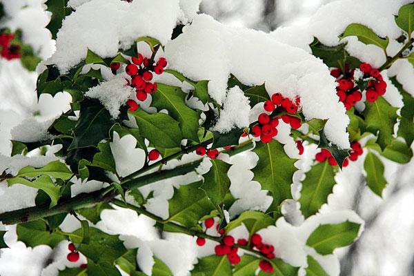 10 úkolů pro vaše rostliny v zimě