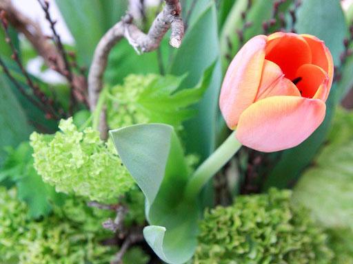 Domácí dekorace z jarní zeleniny a cibulovin