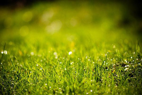 5 kroků ke krásnému a zdravému trávníku. Krok první – VERTIKUTACE