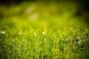5 kroků ke krásnému a zdravému trávníku. Krok třetí − VÝŽIVA