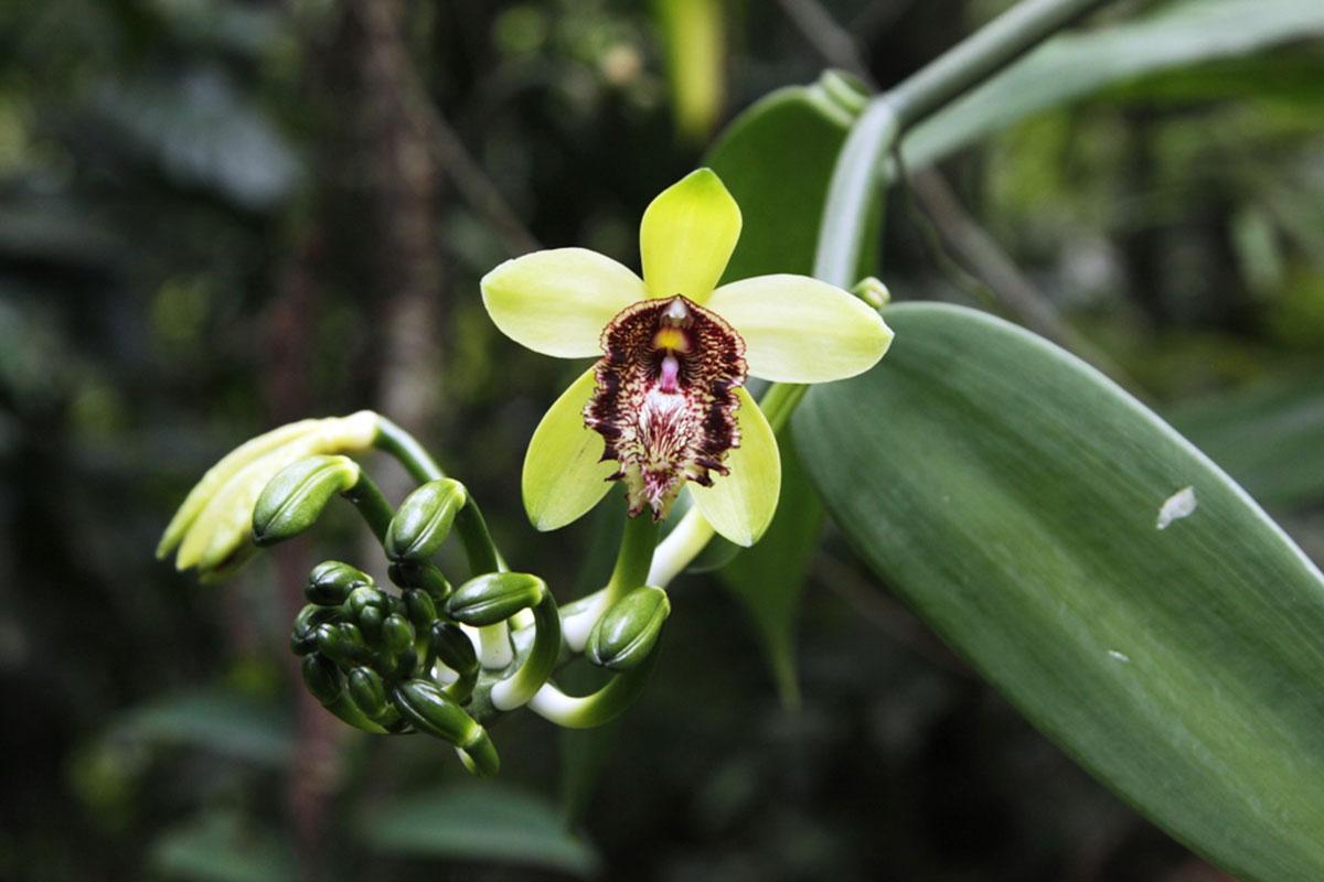 Krásky v interiéru: jak pěstovat orchideje