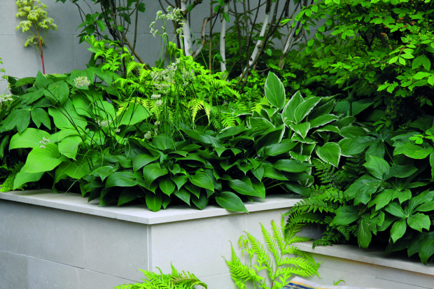 Designér zahradu precizně rozčlenil do geometrických tvarů. Posloužily mu na to především vyvýšené záhony, v nichž najdete převážně stínomilné rostliny.