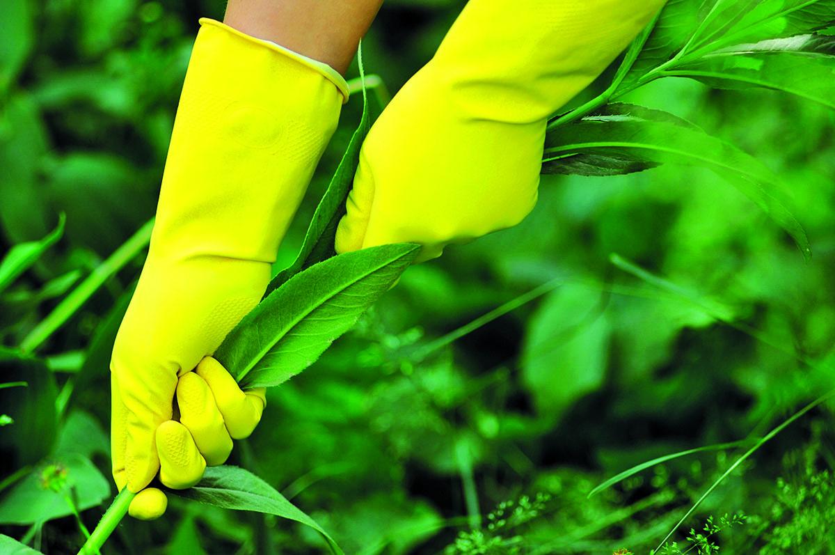 1. etapa − snižování množství plevelných semen