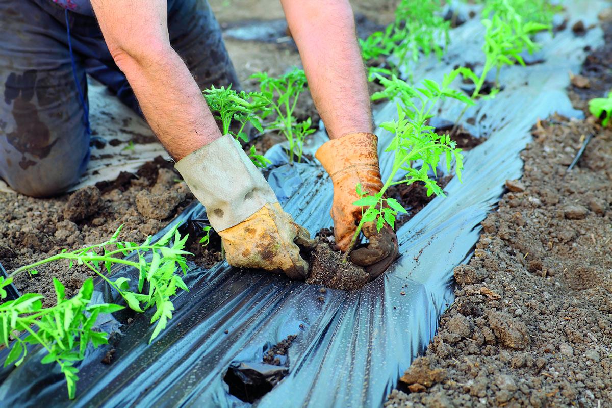 2. etapa − snižování množství trvalých plevelů
