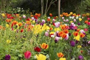 Připravte se na sezónu tulipánů