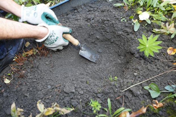 Na místě výsadby vyhloubíme lopatkou jámu. Její dno prokypříme motyčkou. Kameny, tlustší kořeny a nečistoty odstraníme.