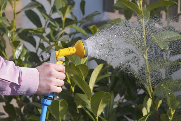 Dobrá rada: Rostliny nezalévejte silným proudem vody – půda by se totiž mohla rozbahnit. Přínosnější je zálivka ve formě jemného deště. (foto: thinkstock.cz)