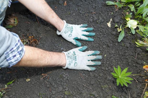 Místo výsadby zasypeme zeminou a opatrně udusáme. Praktické je označit si ho jmenovkou. Výsadbu zalijeme.