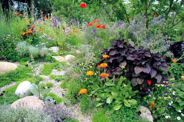 Tento typ zahrad se vposlední době těší oblibě především mezi mladými lidmi. Mnozí však tento koncept pokládají za příliš chaotický amálo reprezentativní. FOTO DANIEL KOŠŤÁL