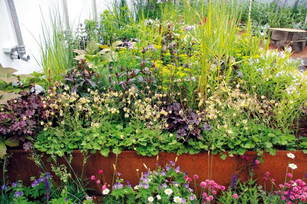 Ideální je, když se při výsadběpoužijí domácí druhy rostlin (například plané nebo dávno zapomenuté), jimž vyhovuje naše klima. Exotické rostliny do biozahrady nepatří, ačkoliv vnich můžeme často vidět například fíkovníky. FOTO DANIEL KOŠŤÁL