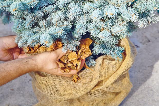 Kmeny nově vysázených dřevin obalíme jutovinou, vnitřek můžeme vyplnit suchým listím. foto Dano Veselský