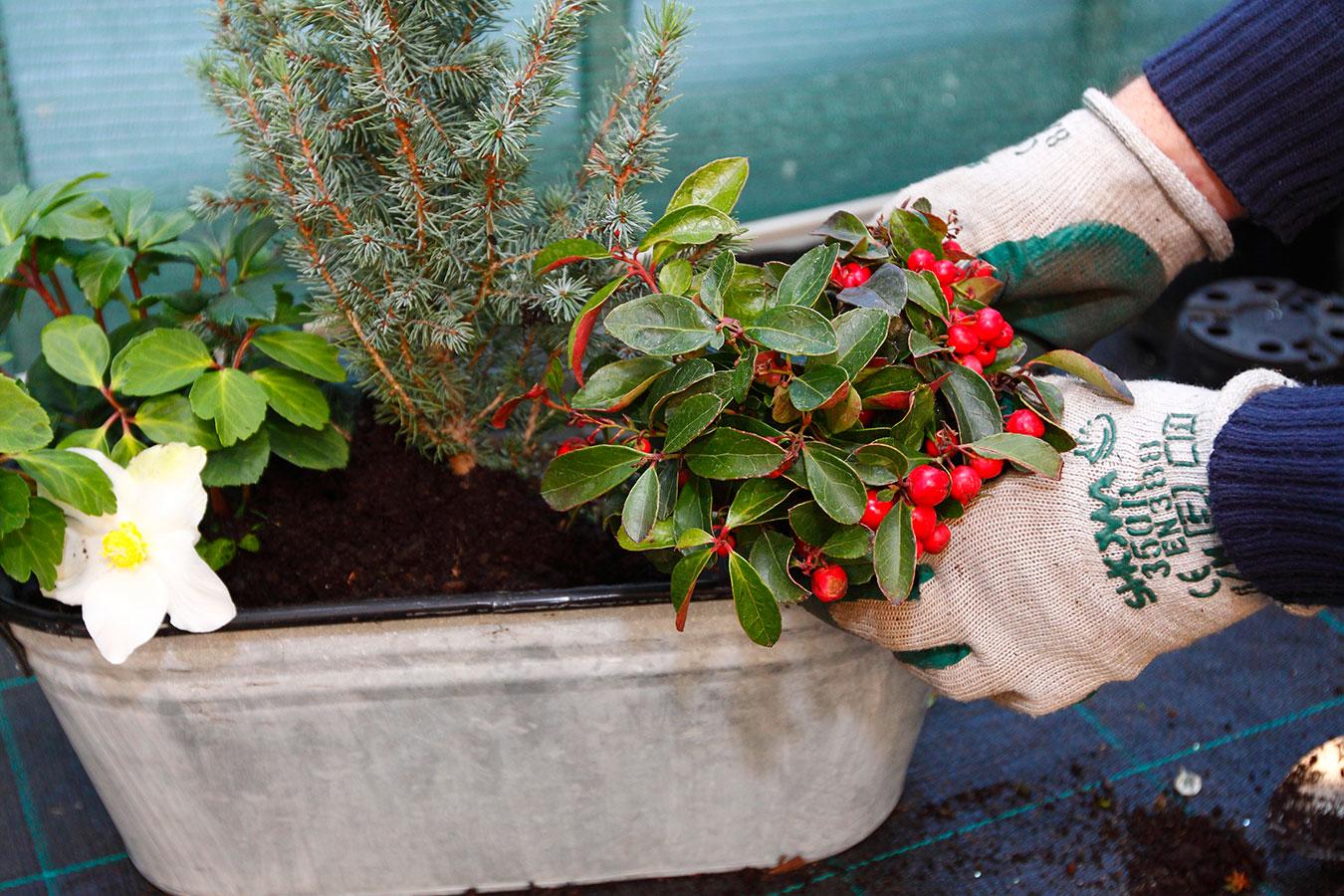 Vytvořte si zimní aranžmá v truhlíku