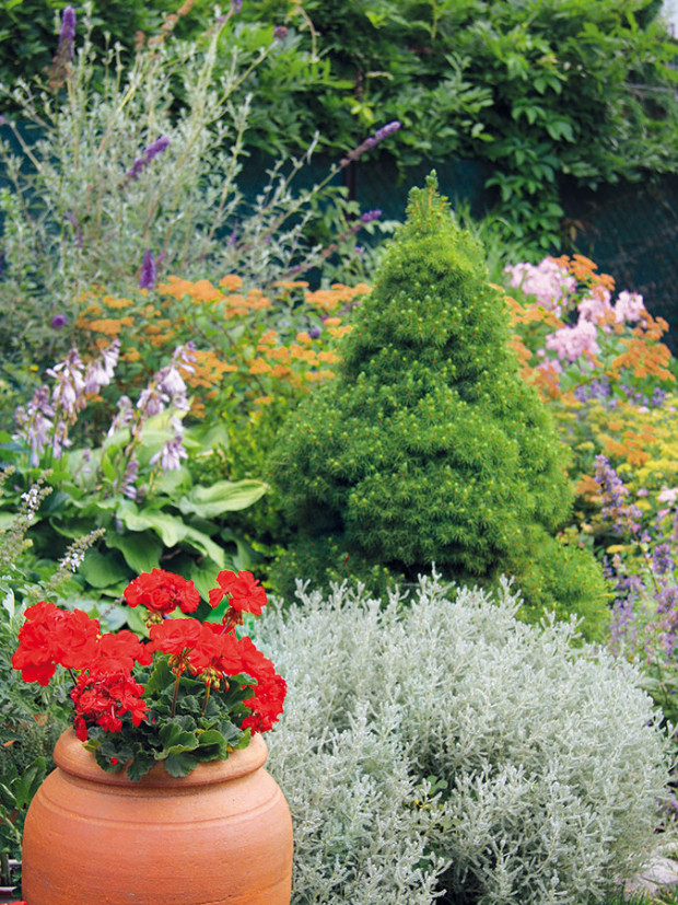 Červené pelargónie do zahrady vnášejí živou barevnost. Na okraji vyniká stříbrolistá svatolína (svatá bylina, Santolina chamaecyparis). FOTO DANIEL KOŠŤÁL