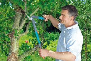 4 věci, které je dobré vědět o prořezávání dřevin