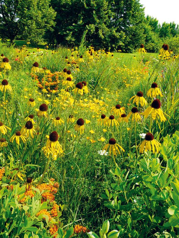 Vpřírodní zahradě je vše krásné zároveň iužitečné. Suchovzdorné trvalky vás potěší pestrými květy, nabídnou nektar opylovačům aptákům vzimě připraví obživu ve formě semen. Vtakovém záhonu odvedou dobrou práci také různé druhy aromatických rostlin abylinek. foto LUCIE PEUKERTOVÁ