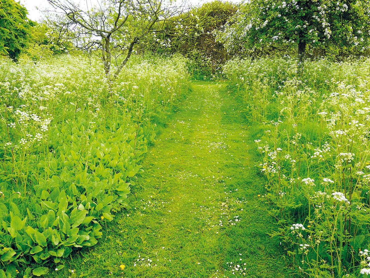Nenáročný květnatý trávník oceníte zvláště na větší zahradě. Zatímco vČesku tento úžasný prvek teprve postupně objevujeme, vAnglii má už dlouhou tradici. Průchod rozkvetlou loukou zajistí pravidelně sečené cesty, jejichž polohu můžete dle vaší potřeby měnit. foto LUCIE PEUKERTOVÁ