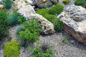 Permakultúrní a přírodní zahrada je plná života