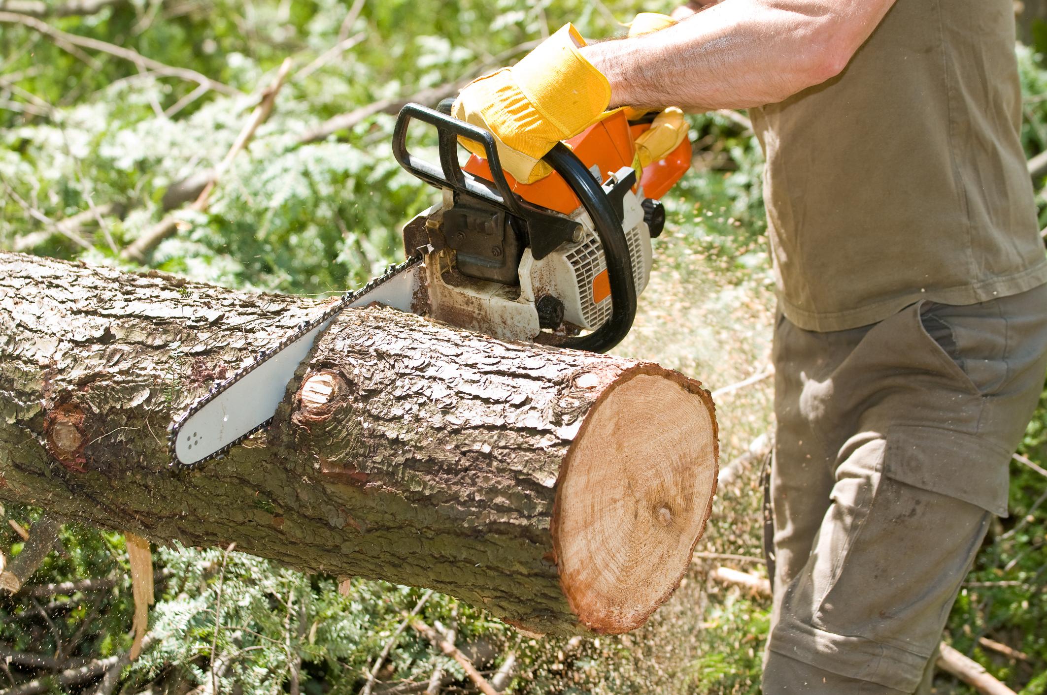 Распил леса своими руками