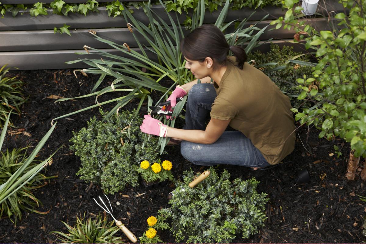 Цветы в саду садовод с