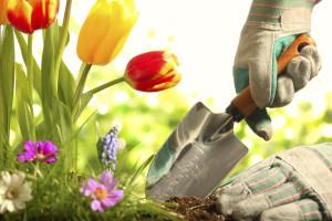 Zahradnictví - HOME